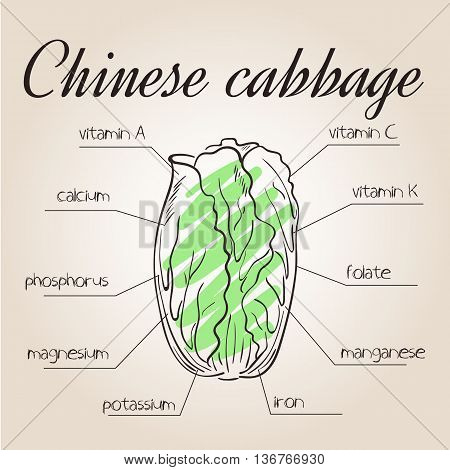 vector illustration of nutrients list for chinese cabbage.