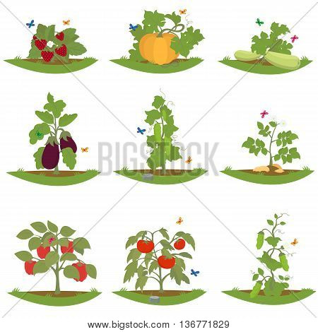 bush fruit-bearing plants. isolated cultured plants. vector