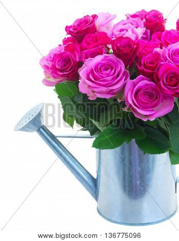 bouquet of pink and magenta fresh roses in watering can close up isolated on white background
