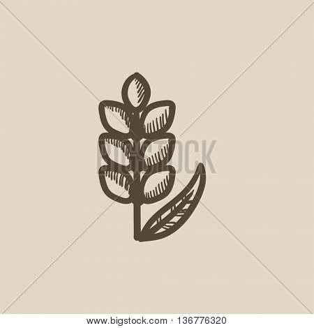 Wheat vector sketch icon isolated on background. Hand drawn Wheat icon. Wheat sketch icon for infographic, website or app.