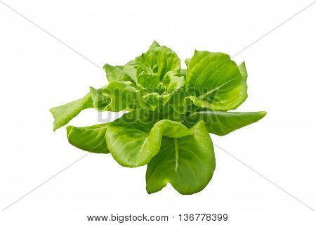 Lettuce isolated on white background clipping path included