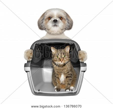Dog holds his friend cat in container -- isolated on white