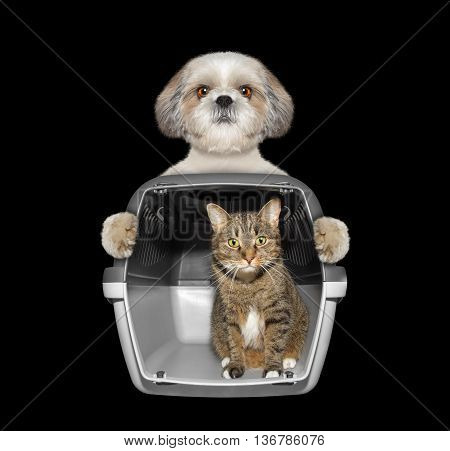 Dog holds his friend cat in container -- isolated on black