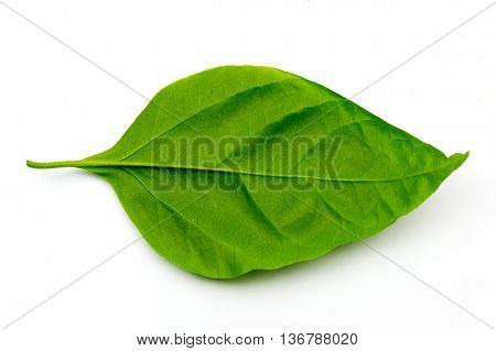 Bougainvillea Leaves Isolated On White Background.