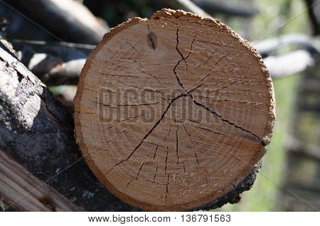 Slice of brown wood with cracks and indentations on a sunny day