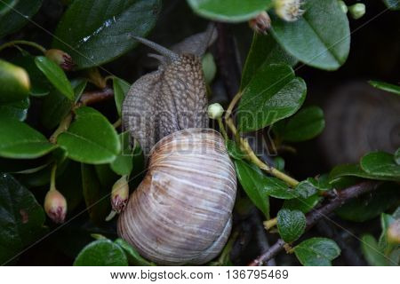 a picture where you can see the details of a snail beautiful picture that can be appreciated and seen