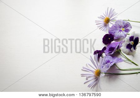 Beautiful bright viola flowers on a white back ground