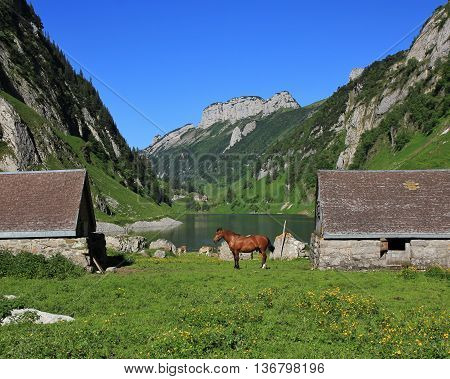 Sheds and horse at lake Fahlensee. Mountains of the Alpstein Range Appenzell Canton. Summer scene in the Swiss Alps.
