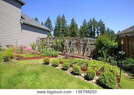 Small Vegetable Garden With Risen Beds In The Fenced Backyard.