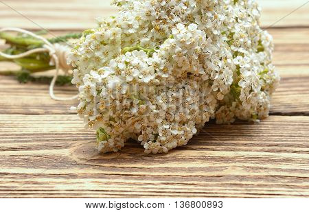 yarrow flowers isolated on wooden background in studio