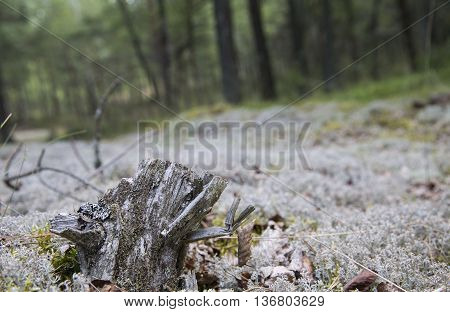 macro forest terrain. with wood and moss outdoors