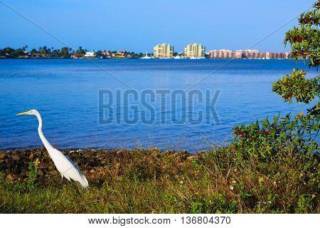 Naples Florida Marco Island view heron bird in Florida USA