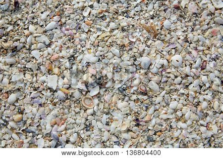 Florida Fort Myers beach sea shells sand in USA