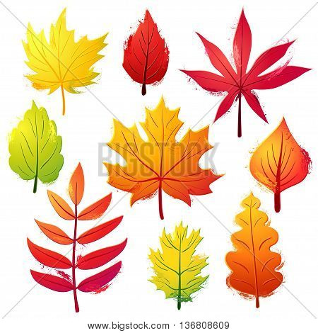 Autumn vivid leaves set. Colorful objects with brush strokes decorations on white background.