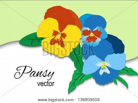 Pansy flower card for design. Summer colorful template