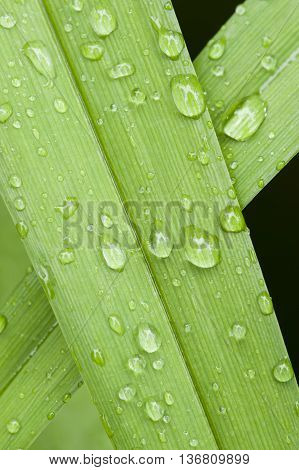 dew drops on blades of green grass