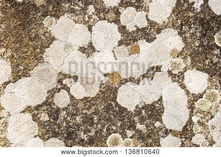 Lichen organisms growing on wood and stone