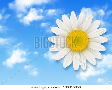 Chamomile flower and blue sky with white clouds, summer flower backgrounds
