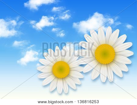 Chamomile flower and blue sky with white clouds, summer flowers backgrounds