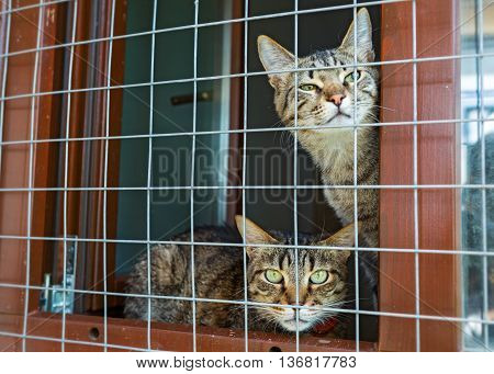 Two cats behind bars of the window of the shelter