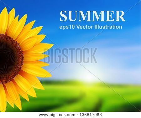 Summer landscape with sunflower, vector illustration.