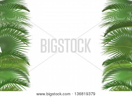 Palm plant tree leaves background template. Exotic tropical festival selebration greeting card
