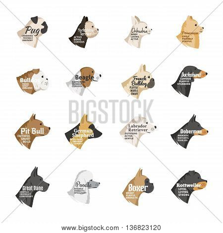 Vector dog breeds icons collection with names and personality description isolated on white for dog club pet clinic and shop.