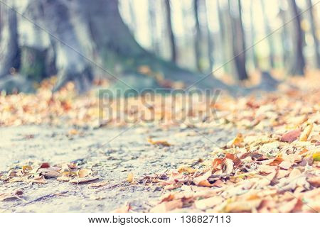 Blurred soft colors fall landscape background with tree roots in the forest and fallen leaves on the ground. Seasonal natural scene. Instagram filter effect used. Copyspace for text