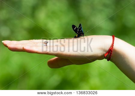 Beautiful butterfly sitting on the hand greenfield background.