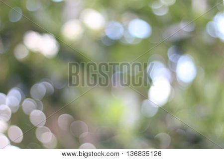 Natural blurred bokeh background from grass and yellow flowers.Bokeh. Abstract Bokeh, blurred bokeh.