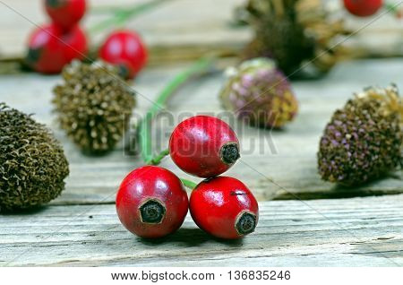 Macro rose hips on the wooden table