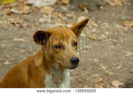 wild dog puppy in Thailand khao sok