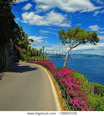 view from road on the Italian Riviera with cedar and bougainvillea.