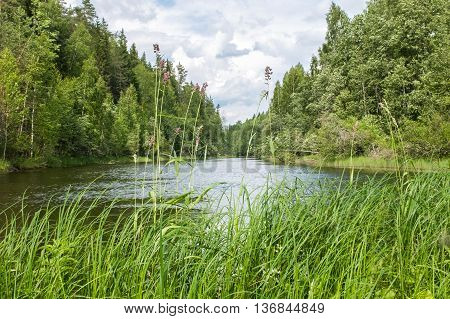 Wild river in North-Western nature. Landscape of woods, grass and water. Beautiful views of the wild Northern territory.