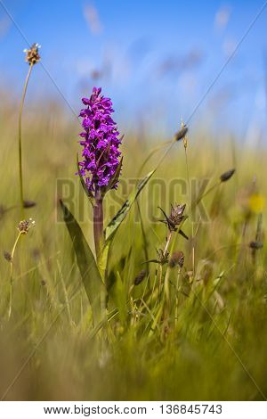 Colorful Orchid On Wadden Island