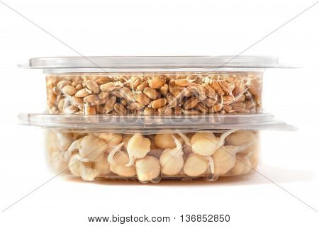grains of germinated chickpeas and germinated  wheat in containers