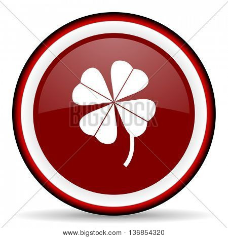 four-leaf clover round glossy icon, modern design web element