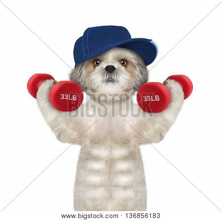 Dog playing sports with dumbbells -- isolated on white