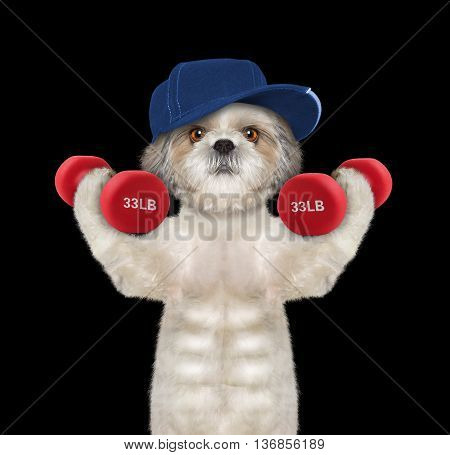 Dog playing sports with dumbbells -- isolated on black