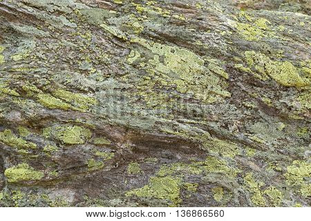 Texture of green yellow Map Lichen deposits on rocks in high mountain in Austria, Europe (Rhizocarpon geographicum)