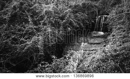 Cascade of a mountain stream in the thick vegetation.