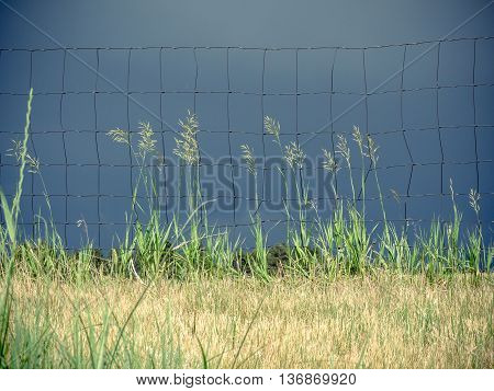 Prairie pasture grass and wire fence with dark, stormy sky background