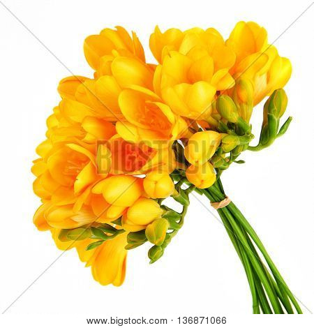 Bouquet of a beautiful yellow freesia flowers isolated on white background