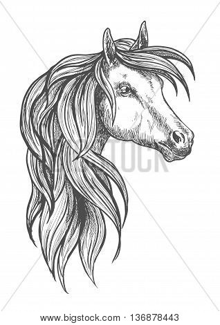 Cavalry war horse of morgan breed icon in sketch style for horse breeding or western riding symbol design with powerful and beautiful young stallion