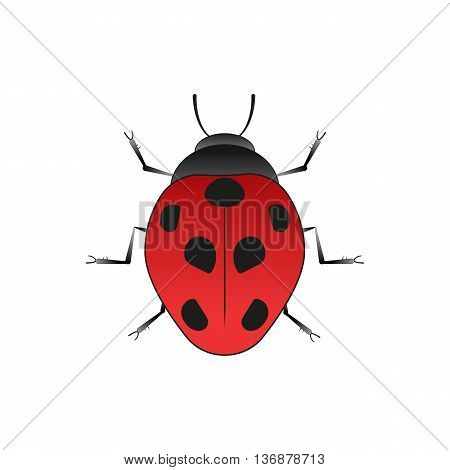 Ladybug. Old school tattoo style. Isolated on white. Vector Graphics.