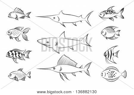 Painted fishes. Shark and swordfish, flounder and carp. Hand drawn fish set vector illustration