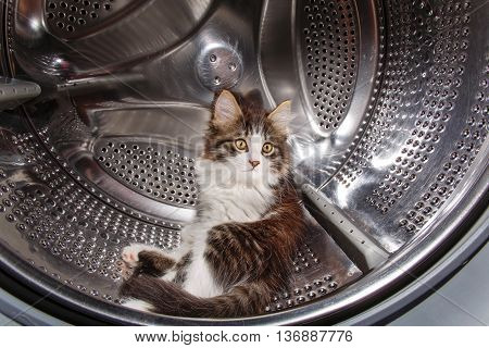 Cute kitten sitting in a drum of a washing machine. Funny pet.