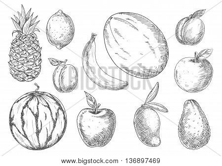 Delicious vegetarian dessert ingredients icon with sketch symbols of banana, mango and pineapple, lemon and avocado, apples and peach, watermelon, plum and canary melon fruits