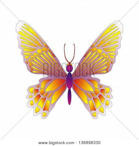 Illustration butterfly Ornithoptera croesus female is larger than male and have wings marked with lines of yellow chevrons, lives in Indonesia