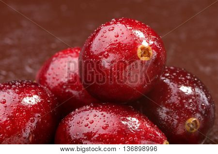Wet Fresh Wild Cranberries. Studio Shoot.